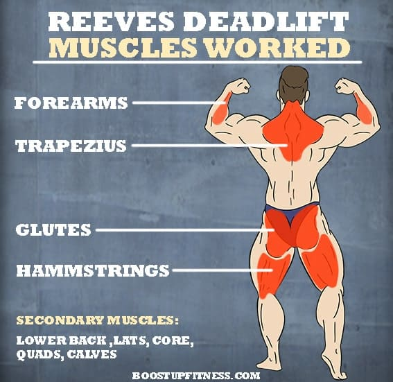 Reeves deadlift muscles worked