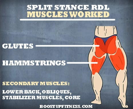 muscles worked by the split stance RDL