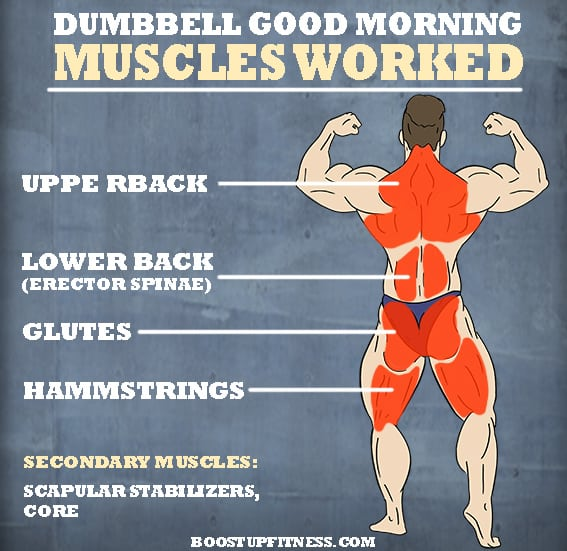 Dumbbell good morning exercise muscles worked