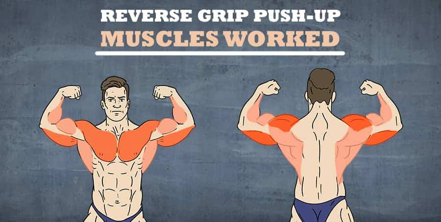 Reverse grip push-up muscles worked