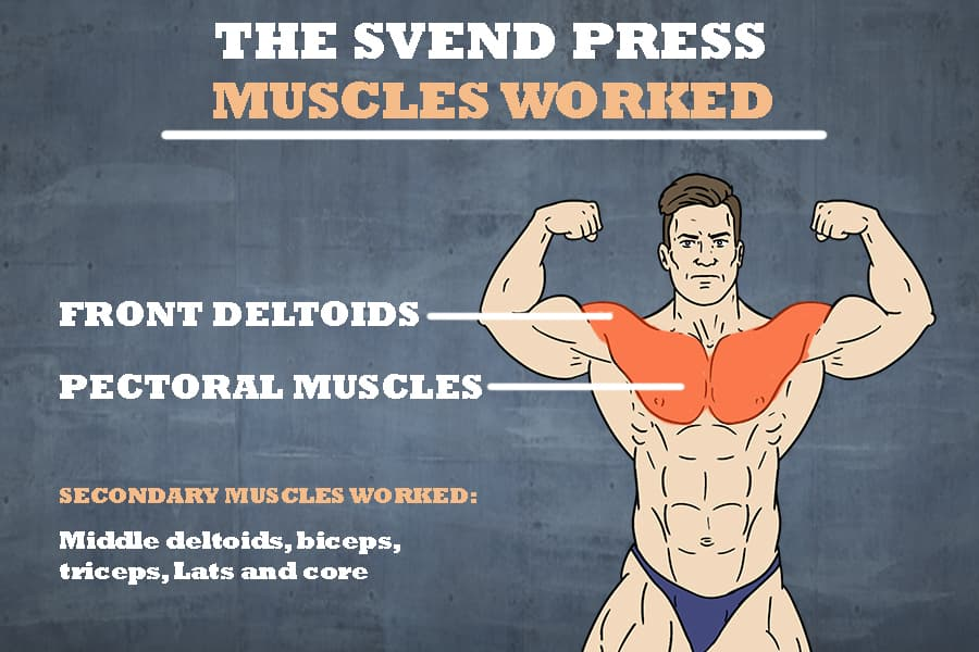 Svend press muscles worked